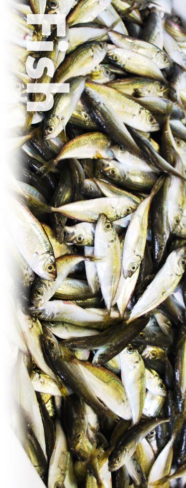 魚類_イメージ